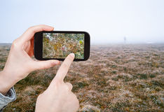 Tourist taking photo of Arctic tundra in spring Royalty Free Stock Photography