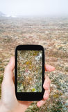 Tourist taking photo of moss in Arctic tundra Royalty Free Stock Photos