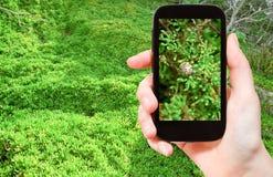 Tourist taking photo of snail on green algae Royalty Free Stock Photo