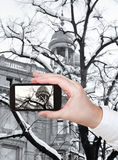 Tourist taking photo of snow on bare tree Royalty Free Stock Photography