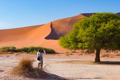Tourist taking photo at Sossusvlei, Namibia. Scenic Acacia trees and majestic sand dunes, Namib desert, Namib Naukluft National Pa. Rk, travel adventure in Royalty Free Stock Photos