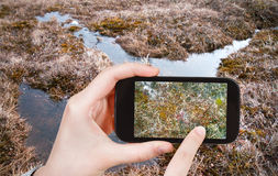 Tourist taking photo of swamp in Arctic tundra Stock Photos