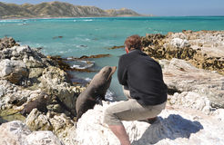 Tourist taking photo of a young curious seal Stock Image