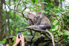 Tourist taking picture of monkey family Stock Image
