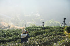 Tourist with tea field and the morning mist, at Doi Angkhang in Stock Images