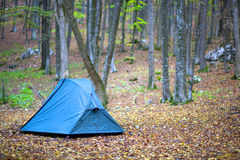 Tourist tent in the autumn wood Stock Photo