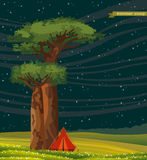 Tourist tent and baobabs. Summer landscape. Royalty Free Stock Photo