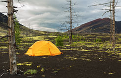 Tourist tent in Dead wood - consequence of catastrophic release of ash during the eruption of volcano in 1975 Tolbachik Royalty Free Stock Image