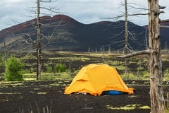 Tourist tent in Dead wood - consequence of catastrophic release of ash during the eruption of volcano in 1975 Tolbachik. Tourist tent in Dead wood - a Stock Photography