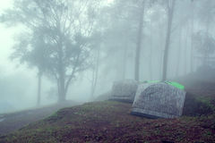 Tourist tent in Forest with fog. Nature backgrounds Royalty Free Stock Photos