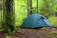 Tourist tent in forest Stock Images