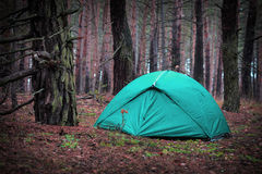 Tourist tent in forest Royalty Free Stock Image