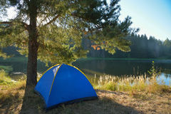 Tourist tent loacated under a pine-tree in summer morning Royalty Free Stock Photos