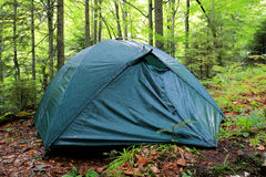 Tourist tent in morning forest Royalty Free Stock Photo