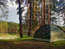 Tourist tent in the pine forest. Hiking in the forest stock images