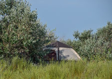 Tourist tent under a tree. Tourist Camping. Multi-Tent Royalty Free Stock Image