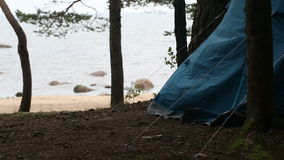 Tourist tent in the woods stock footage
