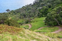 Tourist trail in Bushby Head. Tourist trail through farmland and native New Zealand bush passing Bushby Head to Smugglers Bay near Whangarei royalty free stock photo