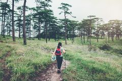Tourist trail hiking in the forest Traveler Woman with backpack Royalty Free Stock Image