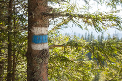 Tourist  trail sign  on the tree Royalty Free Stock Images