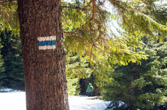 Tourist  trail sign  on the tree Royalty Free Stock Image