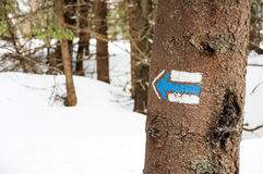 Tourist  trail sign  on the tree Stock Image