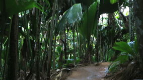 Tourist trail in Vallee de Mai Nature Reserve. In Praslin. Seychelles stock footage