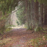 Tourist trail in winter forest - aged photo Royalty Free Stock Image