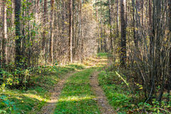 Tourist trail in woods. Tourist trail in misty woods with old country gravel road Royalty Free Stock Photo