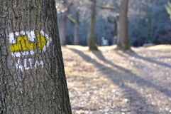 Tourist trail with yellow sign on the tree. In sunny day royalty free stock photo