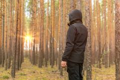Tourist traveler man looks at sunrise in a pine forest. Copy space stock image