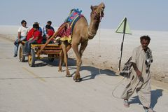 Tourist travelling in India on a cart pulled by camel Royalty Free Stock Images