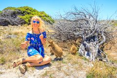 Tourist with two Quokka. Smiling blonde caucasian tourist woman interacts with two curious Quokka in the wilderness of Rottnest Island, Western Australia. Summer Royalty Free Stock Photos