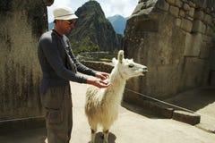 Tourist und Lama Stockbild