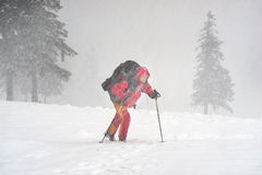Tourist through a violent storm. In the Carpathians is moving toward the goal. In the alpine zone of strong winds and snow impairs visibility and creates Royalty Free Stock Photo