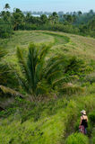 Tourist visit Aitutaki Lagoon Cook Islands Royalty Free Stock Photography