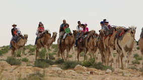 Tourist visit Israel on Camels stock footage