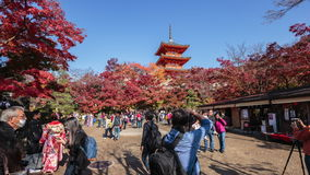 The tourist Visit red fall leaves autumn at Kiyomizu-dera temple in Kyoto, Japan. Kyoto, Japan - Nov, 22 2016 : The tourist Visit red fall leaves autumn at stock video footage