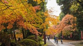 The tourist Visit in walkway at daigoji Temple , Kyoto,Japan. Kyoto, Japan - Nov, 20 2016 : The tourist Visit in walkway at daigoji Temple , Kyoto,Japan stock footage