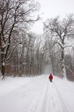Tourist walking alone in winter forest Royalty Free Stock Images