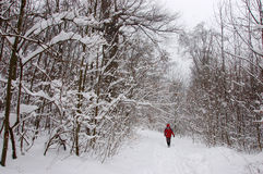 Tourist walking alone in winter forest Royalty Free Stock Photo