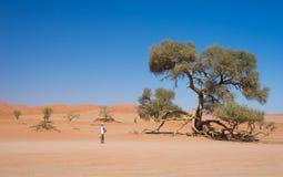 Free Tourist Walking At Sossusvlei, Namibia. Scenic Acacia Trees And Majestic Sand Dunes, Namib Desert, Namib Naukluft National Park, T Royalty Free Stock Image - 113927286