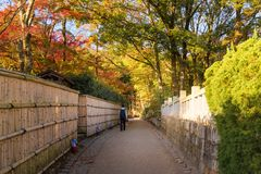 Tourist walking in beautiful nature bamboo forest and maple tree in autumn season. At Arashiyama in Kyoto, Japan Royalty Free Stock Images