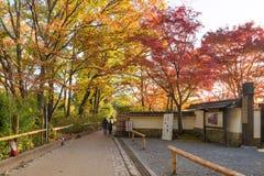 Tourist walking in beautiful nature maple tree in autumn season at Arashiyama. KYOTO,JAPA -NOV26:Tourist walking in beautiful nature maple tree in autumn season Stock Image