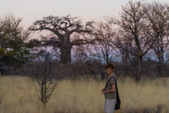 Tourist walking in the bush and Acacia grove at sunset, Bushmandland, Namibia. Adventure and exploration in Africa. Toned image. Royalty Free Stock Photo