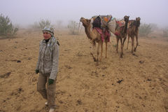 Tourist walking with camels during early morning fog in Thar des Stock Images
