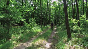 Tourist walking dirt path through a green forest.  stock footage