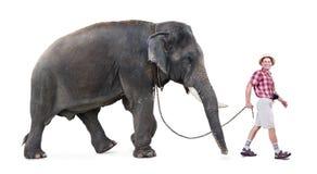 Tourist walking with elephant. Happy tourist walking a elephant, isolated on white background stock photos