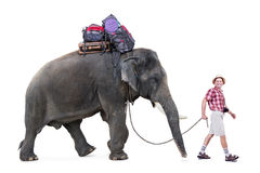 Tourist walking with a elephant. Happy tourist walking a elephant, isolated on white background Royalty Free Stock Image