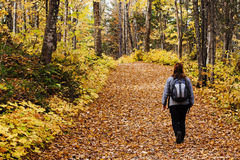 Tourist walking in forest Stock Photos